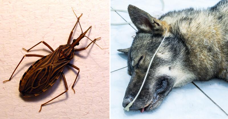 denna insekt d dar 100 tals hundar och barn varje r de flesta som r smittade vet inte om det. Black Bedroom Furniture Sets. Home Design Ideas