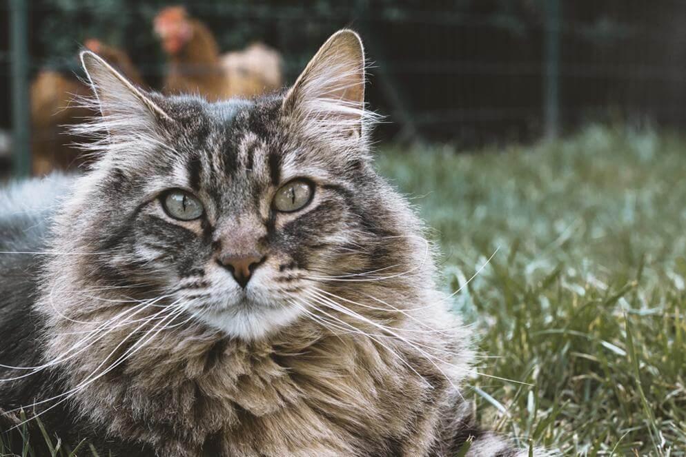 hur länge kan man lämna en katt